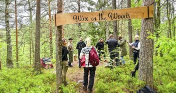 Wine in the Woods artikkelikuva